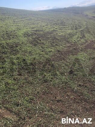 Torpaq - Qusar - 440 sot (1)