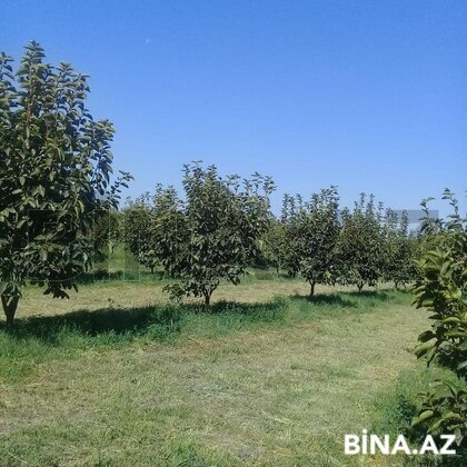 Torpaq - Ağdaş - 255 sot (1)