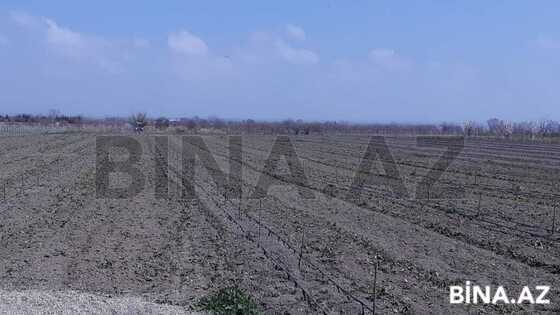 Участок - Шабран - 200 сот (1)