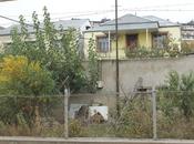 6 otaqlı ev / villa - Köhnə Günəşli q. - 220 m² (2)