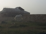 Torpaq - Nardaran q. - 12 sot (4)