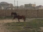 Torpaq - Nardaran q. - 12 sot (2)