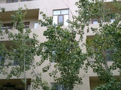 4 otaqlı yeni tikili - Həzi Aslanov m. - 148 m²