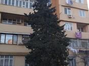 1-комн. вторичка - м. Проспект Азадлыг - 34 м²