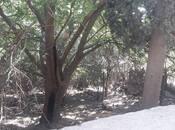 Torpaq - Badamdar q. - 3 sot
