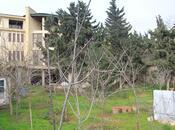 11 otaqlı ev / villa - Bakıxanov q. - 1100 m² (7)