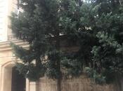 10 otaqlı ev / villa - Nərimanov r. - 500 m² (2)