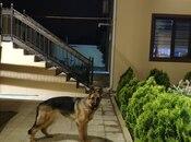 5 otaqlı ev / villa - Fatmayı q. - 170 m² (6)