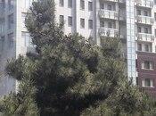 2 otaqlı köhnə tikili - İçəri Şəhər m. - 56 m² (2)