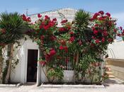6 otaqlı ev / villa - Binəqədi r. - 320 m² (4)