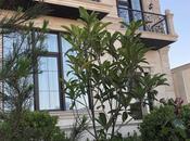 4 otaqlı ev / villa - Badamdar q. - 180 m² (5)