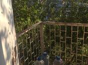 2 otaqlı köhnə tikili - Avtovağzal m. - 50.5 m² (3)