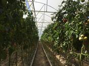 Obyekt - Salyan - 10000 m² (8)