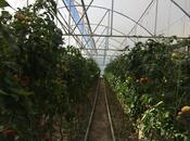 Obyekt - Salyan - 10000 m² (12)