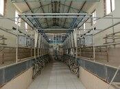Obyekt - İmişli - 3000 m² (32)