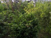 Torpaq - Ağdaş - 5 sot (4)