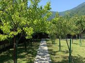 10 otaqlı ev / villa - Qəbələ - 400 m² (42)