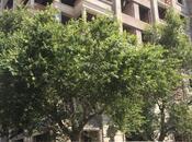 5 otaqlı yeni tikili - Nərimanov r. - 315 m² (16)