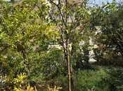 6 otaqlı ev / villa - Badamdar q. - 260 m² (42)