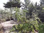 Bağ - Pirşağı q. - 100 m² (2)