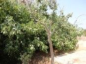 Bağ - Nardaran q. - 130 m² (14)