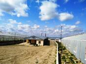 Torpaq - Şirvan - 1000 sot (15)