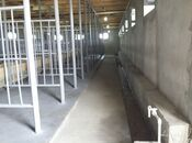 Obyekt - Şamaxı - 350 m² (13)