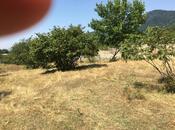 Torpaq - Zaqatala - 1500 sot (18)