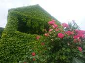 6 otaqlı ev / villa - İsmayıllı - 200 m² (8)