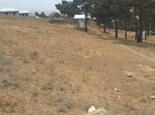 Torpaq - Şamaxı - 8 sot (4)