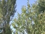 Torpaq - Şamaxı - 46 sot (6)