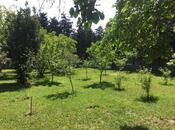 Bağ - Novxanı q. - 300 m² (5)