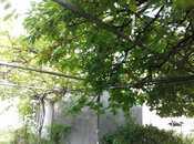 5 otaqlı ev / villa - Qax - 237.8 m² (10)