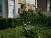 8 otaqlı ev / villa - Binə q. - 355 m² (5)